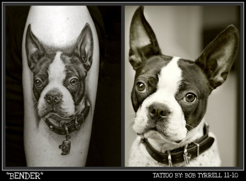 This is a tattoo of my Boston Terrier Bender.  The ink was done by the incredible Bob Tyrrell in 2010.  I had waited three years for Bob since he's very popular and travels so much.  He came to St. Louis for a convention and I was lucky enough to get a time slot!  Bender's tattoo took 9.5 hours but it didn't hurt a bit since Bob is very light handed and mostly used a shader needle.  He is so talented.