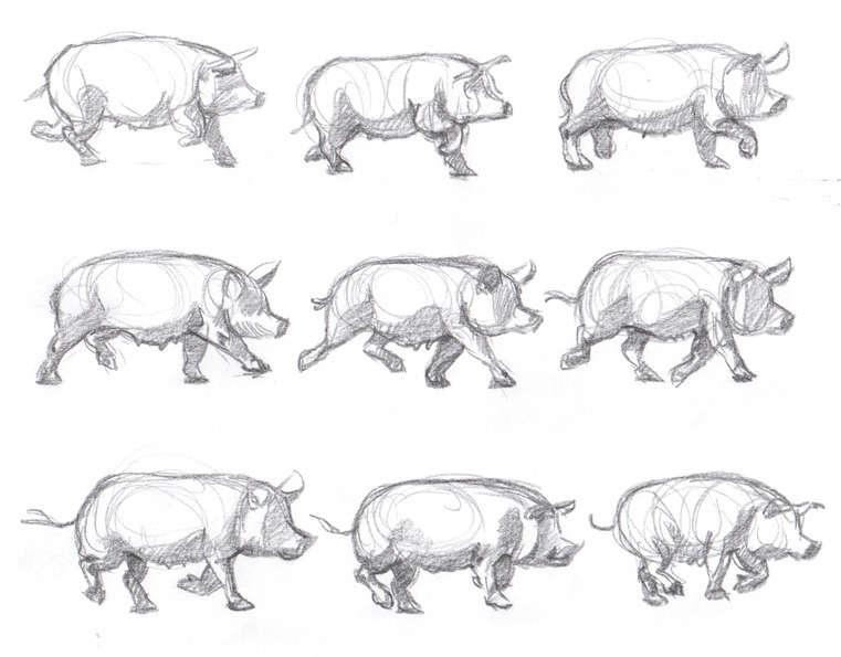 Even More Muybridge!Pig walk cycle! —Chiparoo