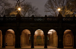 birdcagewalk:  -cityoflove:Central Park, New York City Moeys Photography