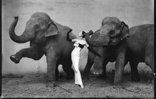 brokenderrewyn:  Dovima with elephants, evening dress by Dior, Cirque d'Hiver, August 1955