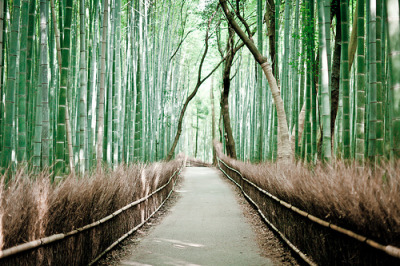 black-wolves:  Sagano bamboo forest (by Milton CJ)