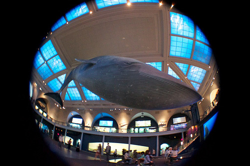 Took this shot yesterday at the American Museum of Natural History