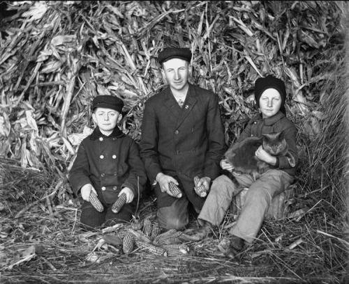 It's the Krueger Family again! I'm guessing this is Tramp. Husking Corn. Alex Krueger, ca. 1910. Source: Wisconsin Historical Society.  Edgar Krueger, Frank Albert Goetsch, and Anson Dewey Goetsch pose while husking corn on the Krueger farm.