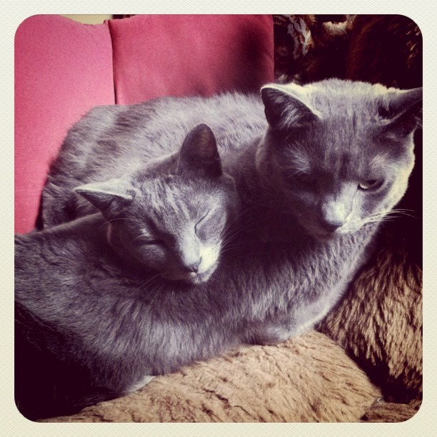 Two-Headed Sleepy Kitty (Taken with instagram)