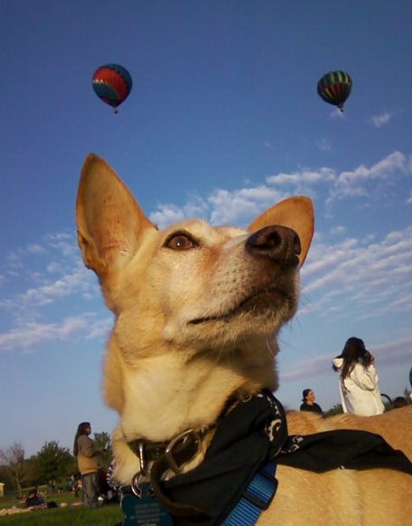 Corgi Aviation
