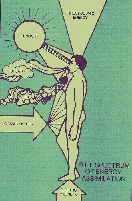 Full Spectrum of Energy Assimilation