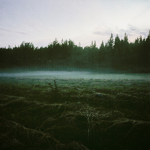 Fog at dusk in Djäkneböle, Sweden.