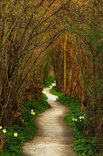 Yew tree tunnel, The Netherlands