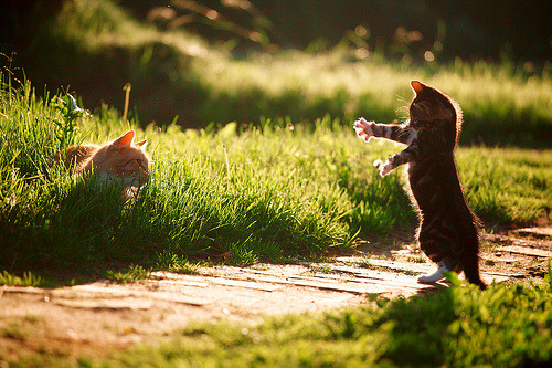 lori-rocks: Best Buddies (or) Give me a hug (or) The Kung Fu Kitten  By lichtmaedel