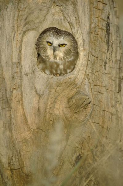 "hungoverowls:  ""Look buddy- I could either spend the rest of my day catching up on Mad Men, or I can spend it hating the shit out of you. You pick.""  bahahahaha, colby."