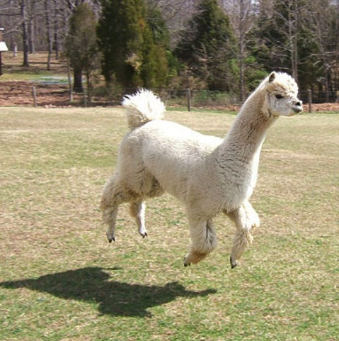 its a floating llama.