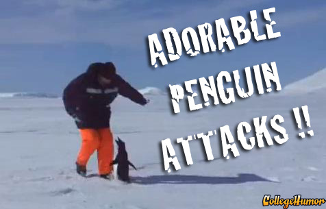 Adorable Penguin Attacks - (Click to play)