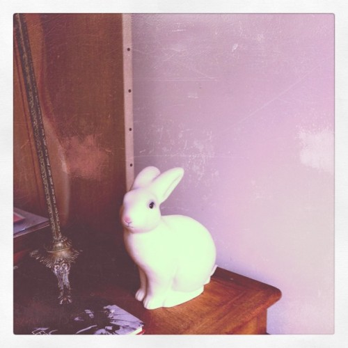 white rabbit ~