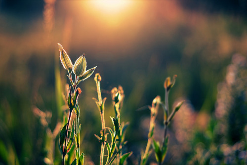 innaliciouz:  Summer offensive by Danired on Flickr.  today: woke early. coming up: PetCo for a fish (!!!), Health Center appointment (FINALLY), buy tea, visit the post office.