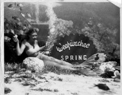 Weeki Wachee Springs 1950s.