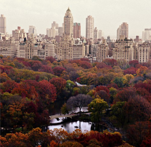 enjoyingjoy:  Autumn in New York