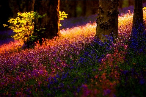 thishopelessromantic:  the colors are so rich and enchanting