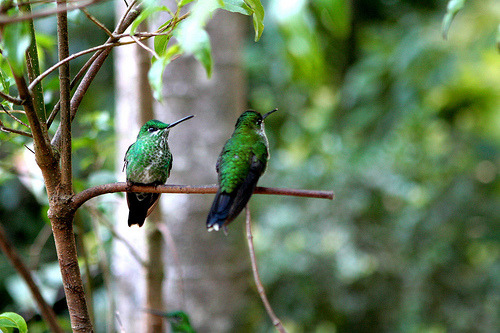 prevailing:  couplea hummingbirds (by Dan Hewins)