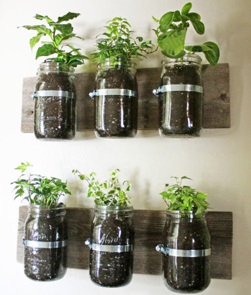 modcloth:  DIY of the day! We love this space saving Mason Jar Wall Planter!  I need to make this