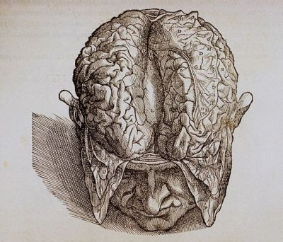 fuckyeahmedicaldiagrams:  A woodcut illustration from Andreas Vesalius' 1543 treatise on anatomy, De Humani Corporis Fabrica.