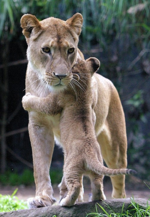 art-and-dream:  Animals photography wonderful hug baby