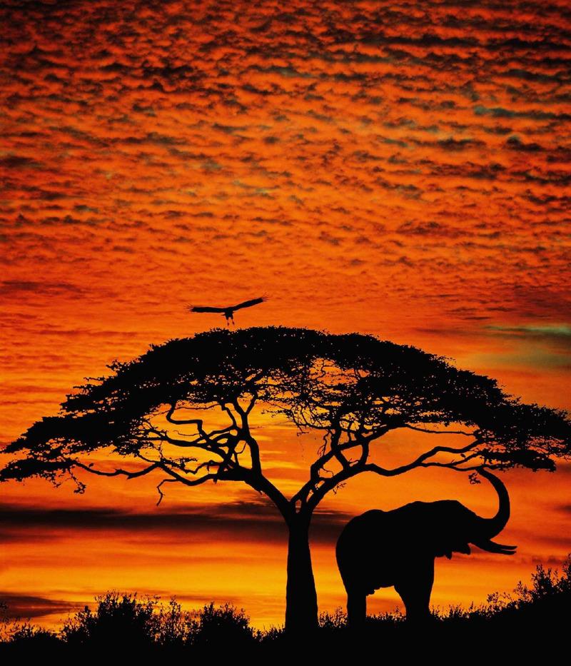 Africa…  wow wow wow!!!!!!!!!!!!! J'ai retrouvé mon amourrrrrrrrrrr♥♥♥