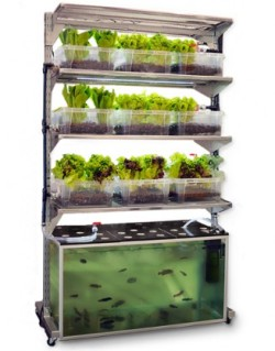 prettylittlepieces:  This is brilliant. A vertical garden using a fish tank for it's water system.