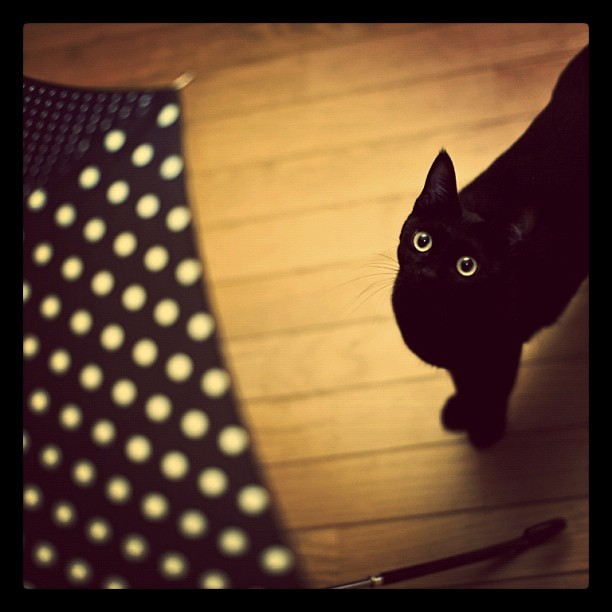 黒傘とリサ Black umblera & Lisa #umblera #blackcat #black #cat #Lisa #dot (Taken with instagram)