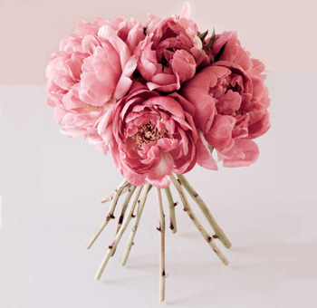 Peonies are beautiful