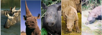 Salute Rhino Heroes on World Rhino Day It's Rhino Day on 22 September.  This year, we're saluting rhino heroes, the brave men and women who devote their lives to defending rhinos. Some of them lose their lives. South Africa's rhinos are still facing a poaching onslaught, caused by the illegal rhino horn trade driven by demand from Asia. Rhino poaching is often carried out by well-armed, international criminal syndicates using sophisticated technology.  More than 280 rhinos have already been killed by poachers this year.  The courageous effort of rhino heroes must be backed up at other levels. This includes making sure that those guilty of rhino crimes do not walk free on technicalities, and that punishment is commensurate with the crime.  In South Africa, officials have begun to conduct more rigorous prosecutions and impose stricter sentences. WWF has called for a corresponding commitment by countries in Asia where illegal demand for rhino horn is driving poachers. Learn more about World Rhino Day and support WWF's to protect rhinos