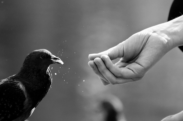 Feeding pigeon B&W by HERNANTIPA on Flickr.Via Flickr: Here, full color version:www.flickr.com/photos/hernantipa/6169500842/