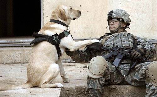 army11c:  mans best friend