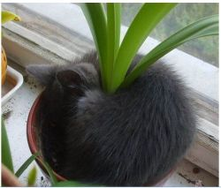 the-absolute-funniest-posts: My cat likes to hide in potted plants.