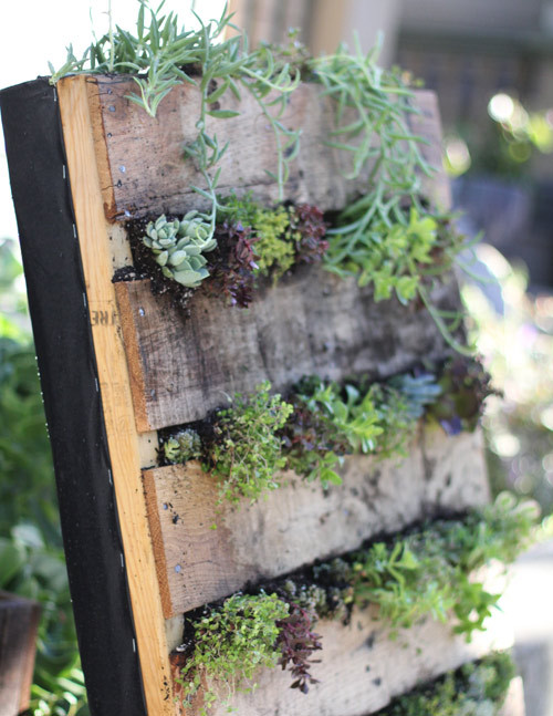 We featured an earlier turn-a-pallet-into-a-garden project here. But still, this is another good how-to. Check out both and compare and contrast! One thing I'm wondering is why nobody seems to decorate their pallet — painting it, or covering it with Unconsumption logos, let's say. Anyway, here's the how-to: diy project: recycled pallet vertical garden | Design*Sponge