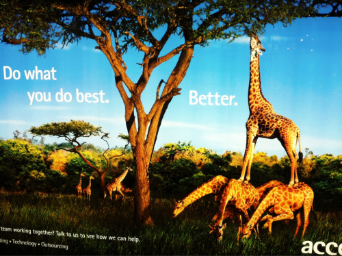 .:.not only am I obsessed with giraffes, but I do love this ad.:.