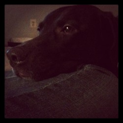 263. always begging.  (Taken with instagram)