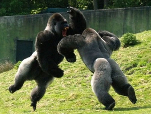 """GET YOUR STINKING PAWS OFF ME YOU DAMNED DIRTY APE!"""