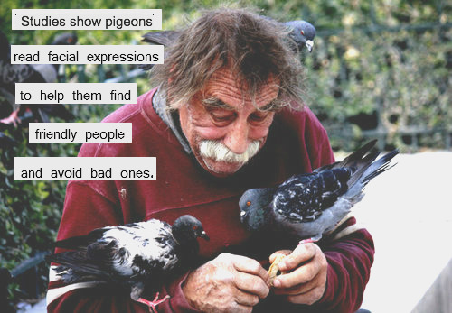 theinformedvegan:  Be Someone A Pigeon Could Love.