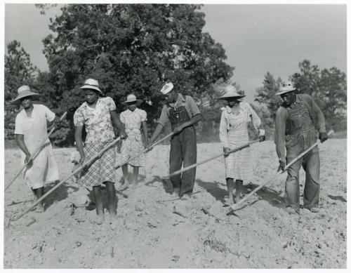 theycallmezorawalker:   The family of Mr. Leroy Dunn, chopping cotton in a rented field near White Plains, Greene County, Georgia, June 1941.. Delano, Jack — Photographer. June 1941