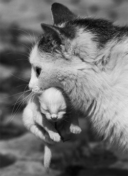 daily-animals:  llbwwb:  Mother's care by Marcel Comendant  You have to follow this blog, it's amazing