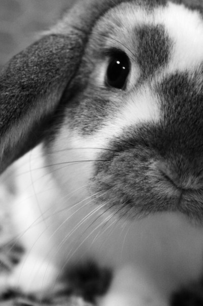 xameliax:  .Curious Colin. (follow xameliax for even more adorable bunny pictures on your dashboard!)