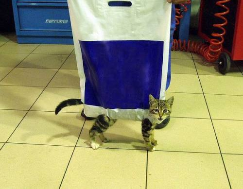 downlo:  The cat's in the bag.