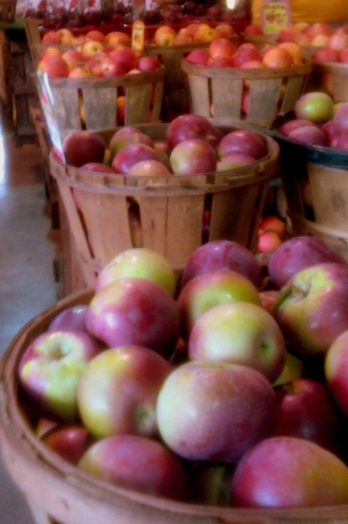 jennayc:  Went to Wentzler's Orchard today. Apple cider, apple dumplings, cherry pie. I'm so happy it's fall!