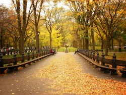 "nythroughthelens:  Autumn in Central Park. New York City I was thrilled to find out this photo was recently chosen and used for an article called The World's Most Romantic Places. I happen to agree with the assessment but I am severely biased, of course :). I wish the peak of autumn in New York City when scenes like this occur would last longer than two weeks. Autumn at its peak is such an all-encompassing experience. The sight of trees in colorful ecstasy, the smell of cinnamon and cloves, the sound of particularly crunchy leaves under foot, the feel of colorful leaves in hand prior to throwing them up in the air; all of it makes autumn my most favorite time of year. —- —- Buy ""Autumn Romance - Central Park"" Prints and Posters here, View my store, email me, or ask for help."