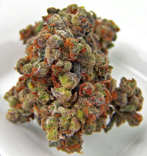 thatsgoodweed:  Strain Name: Purple TrainWreck