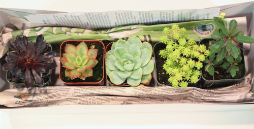 kpktran:  Overload on Flickr. Picked up these babies from the farmer's market today. Starting my plant game thanks to bern.  dope; is this somewhere in irvine? pls take me (||). nice variety of texture, height and color. what is shauty on the right? doesnt look like a sucuclent