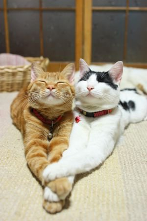 "catsbeaversandducks:  ""We are very happy together!"" Via raurublock"