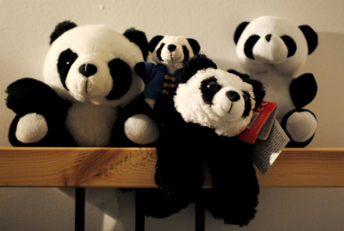 jaysonignacio:  This is my panda collection. It's on the top of my bed post. I love pandas, if you think that's weird then I don't care!