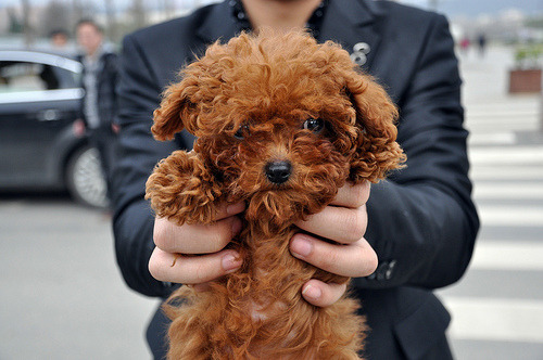 OMG I freakin want this doggie!!!!:)