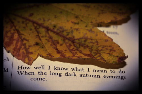 "bookoasis:  How well I know what I mean to doWhen the long dark Autumn evenings come,And where, my soul, is thy pleasant hue?With the music of all thy voices, dumbIn life's November too! I shall be found by the fire, suppose,O'er a great wise book as beseemeth age,While the shutters flap as the cross-wind blows,And I turn the page, and I turn the page,Not verse now, only prose!   —  Robert Browning, from ""By the Fireside"" Image by Sophie"
